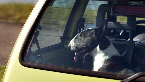 'Kwartiertje boodschappen doen kan voor hond in hete auto fataal zijn'