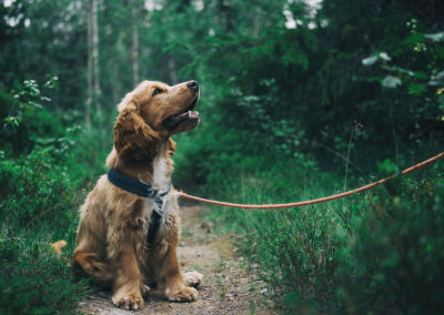Training pup
